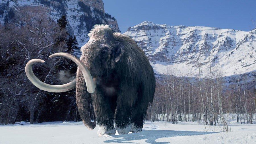 buzul-cagi-mamut