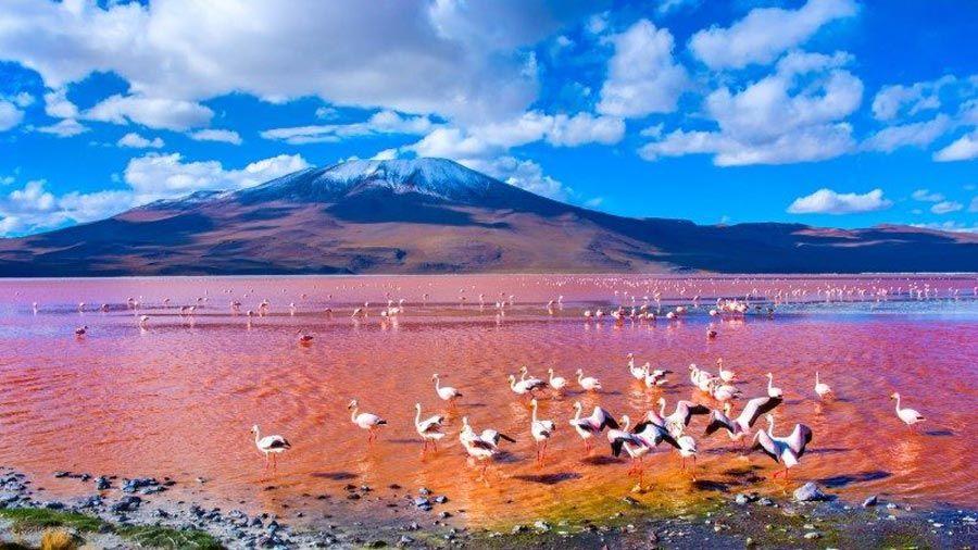 Laguna-Colorada-Golu-Bolivya